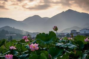 【春季大赏】梦里莲乡,印象石城