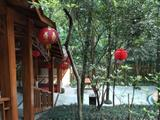 清远市银盏森林温泉