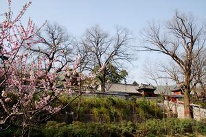 【春季大赏】京北巨刹红螺寺