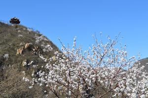 【春季大赏】北京昌平2日春游——蟒山+农业嘉年华+居庸关长城。