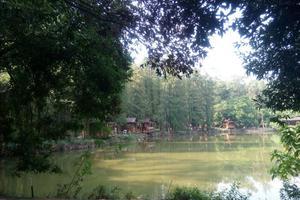 【春季大赏】良凤江国家森林公园的绿色