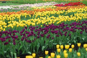 【春季大赏】花花世界--鲜花港