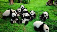 四川、成都、九寨沟、黄龙熊猫乐园双飞悠闲6日跟团游(赠送享用羌族特色餐,体验羌式品质风味)