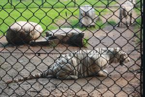 """【一写就""""惠""""】北京野生动物园一日游"""