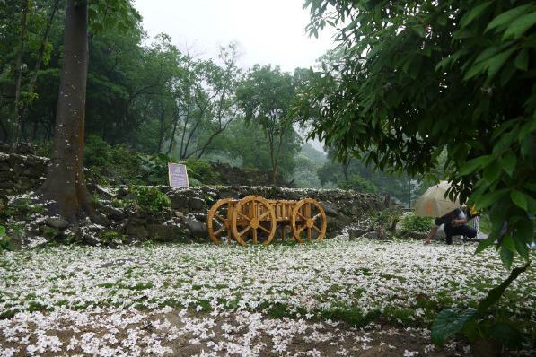 二龙山生态园广州二龙山花园五月雪