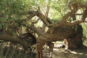 阿克苏天山神木园和乌什沙棘林湿地公园游记