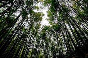 【我是达人】  蜀南竹海:雾中的蜀南,梦中的竹海