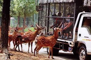 """【一写就""""惠""""】北京动物园"""