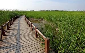 【我是达人】在东滩湿地公园等待候鸟