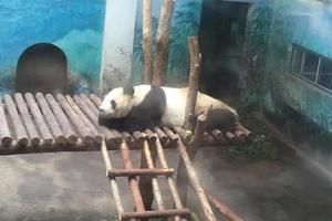 """【一写就""""惠""""】红山森林动物园AAAA级景区"""