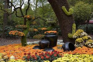 【全民摄影季】在那菊花盛开的地方