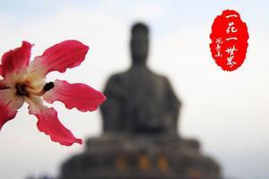 【全民摄影季】广州观音山: 佛曰,一花一世界