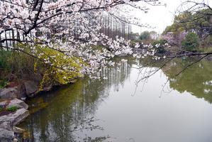 """【一写就""""惠""""】上海植物园之行"""