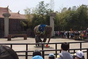 """【一写就""""惠""""】杭州野生动物园一日游"""