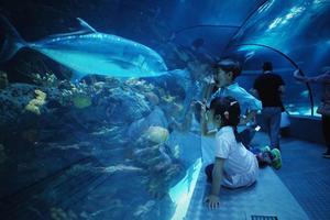 """【一写就""""惠""""】带着果唛去旅行-龙凤宝贝上海长风海洋世界游记"""