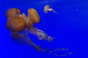 """【我要""""加游包""""】""""上海海洋水族馆""""半日游流程一览~"""