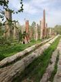 新疆野马古生态园