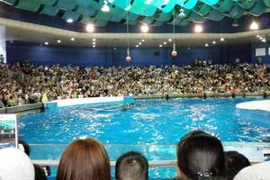 端午亲子活动之南京海底世界一日游