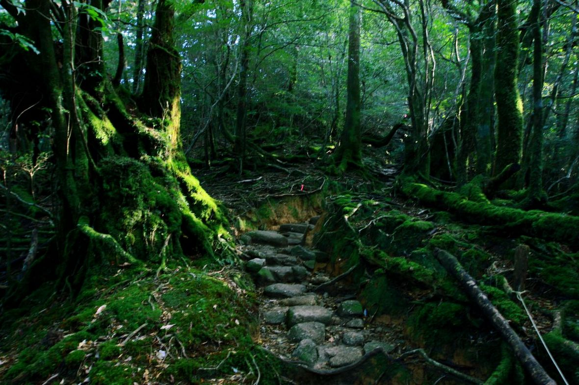 【自由行】探秘屋久岛——与森林妖精的浪漫约会图片