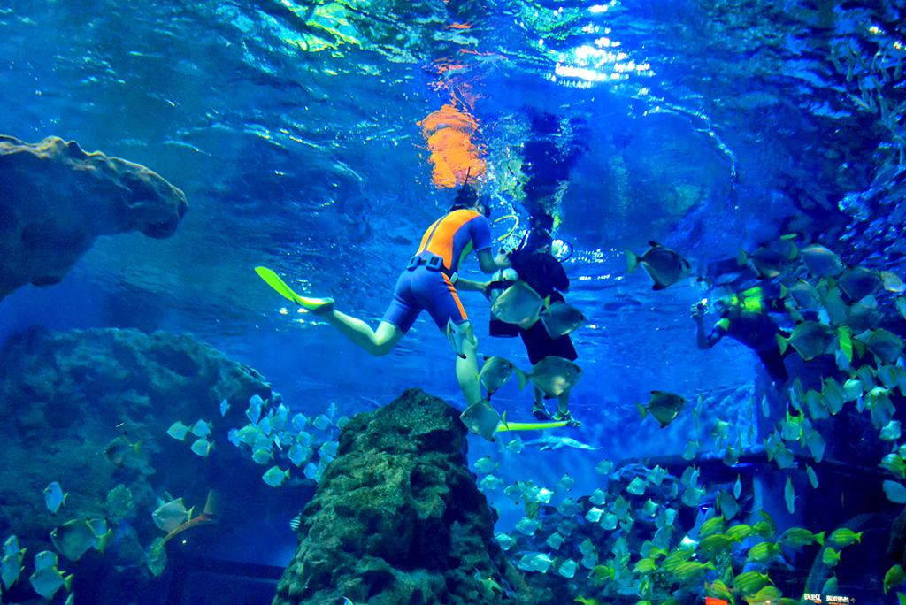 ...用去青岛大连,武汉也可探秘海底世界,畅游梦幻海洋图片 923897 1024x684