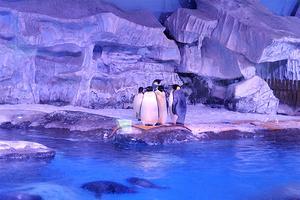 【我是达人】不用去青岛大连,武汉也可探秘海底世界,畅游梦幻海洋!