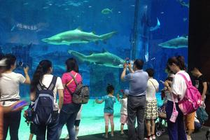"""【一写就""""惠""""】一家三口的北京海洋馆一日游"""