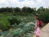 海珠国家湿地公园