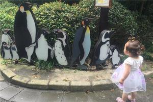 上海动物园一日游