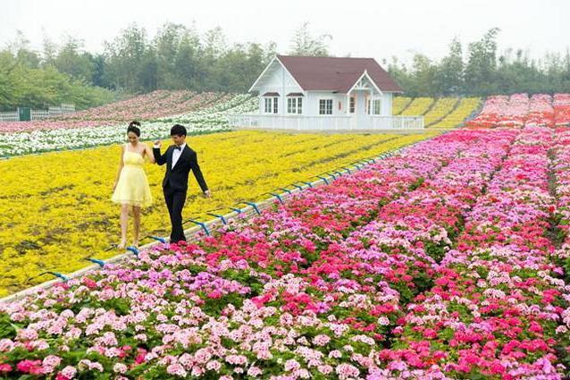 北京爱情海玫瑰园地址在哪?门票价格及