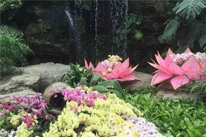 辰山植物园一日游