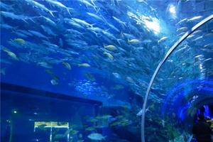 """【一写就""""惠""""】一次快乐的游玩之武汉海昌极地海洋世界"""