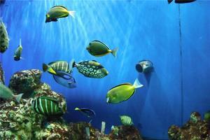 """【一写就""""惠""""】海底世界探秘"""