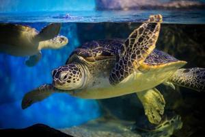 【缤纷迪士尼】悠游自然博物馆 看体重180公斤的鱼