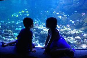 """【一写就""""惠""""】南昌万达海洋乐园一日癫狂游"""