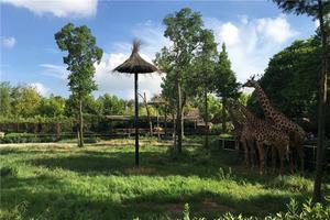 上海野生动物园 愉快并难忘的一天