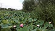 台儿庄运河国家湿地公园