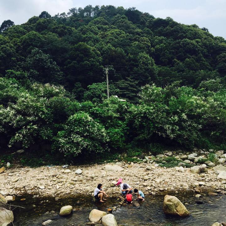 惠州酥醪村(图1)