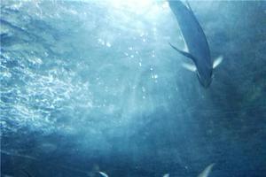 开学前的疯狂南京海底世界