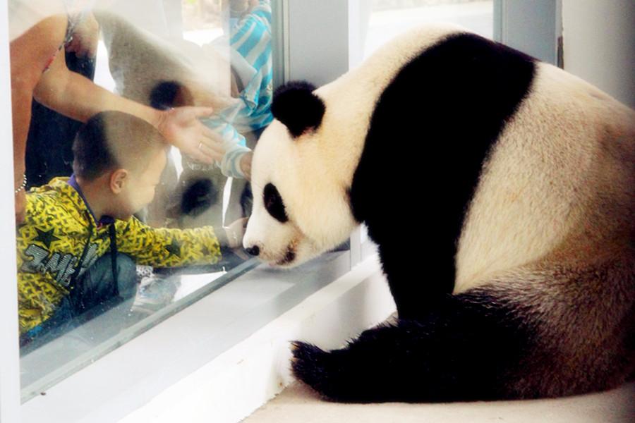 苏州太湖国家湿地公园熊猫馆和熊猫主题广场