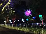 2016第二届无锡蠡湖国际灯光文化艺术节