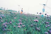 初见香草园