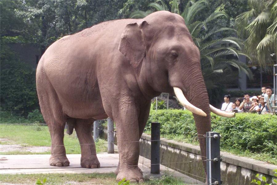重庆动物园门票价格、地点、交通指南