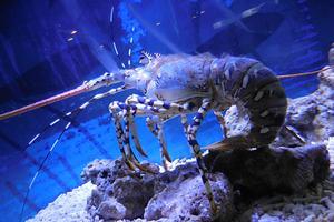 北京海洋馆+动物园一日游