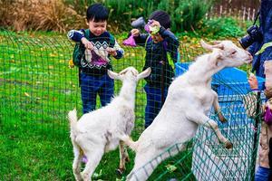 【我是达人】崇明泰生农场亲子活动全体验