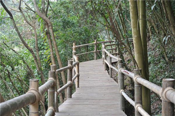 二龙山生态园二龙山木栈道