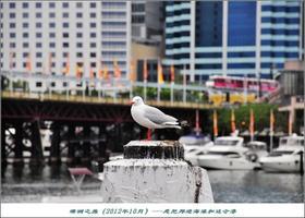 【我是达人】【澳洲】悉尼:邦迪海滩与达令港