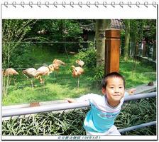 【我是达人】寻隐小记(11)--豆豆匆匆游动物园