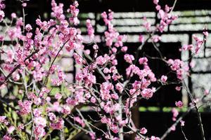 【微攻略】谁说无锡只有樱花?初春赏梅正当时!