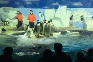 天津海昌极地海洋公园半日游(大量剧透图片,看完可不必去了,想去的千万别往下看图)