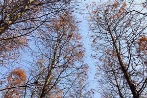 【新年新旅程】东滩湿地公园,人与自然的天堂